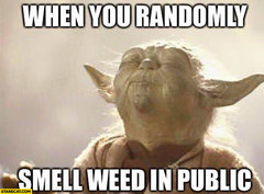 when-you-randomly-smell-weed-in-public-yoda-meme.jpg